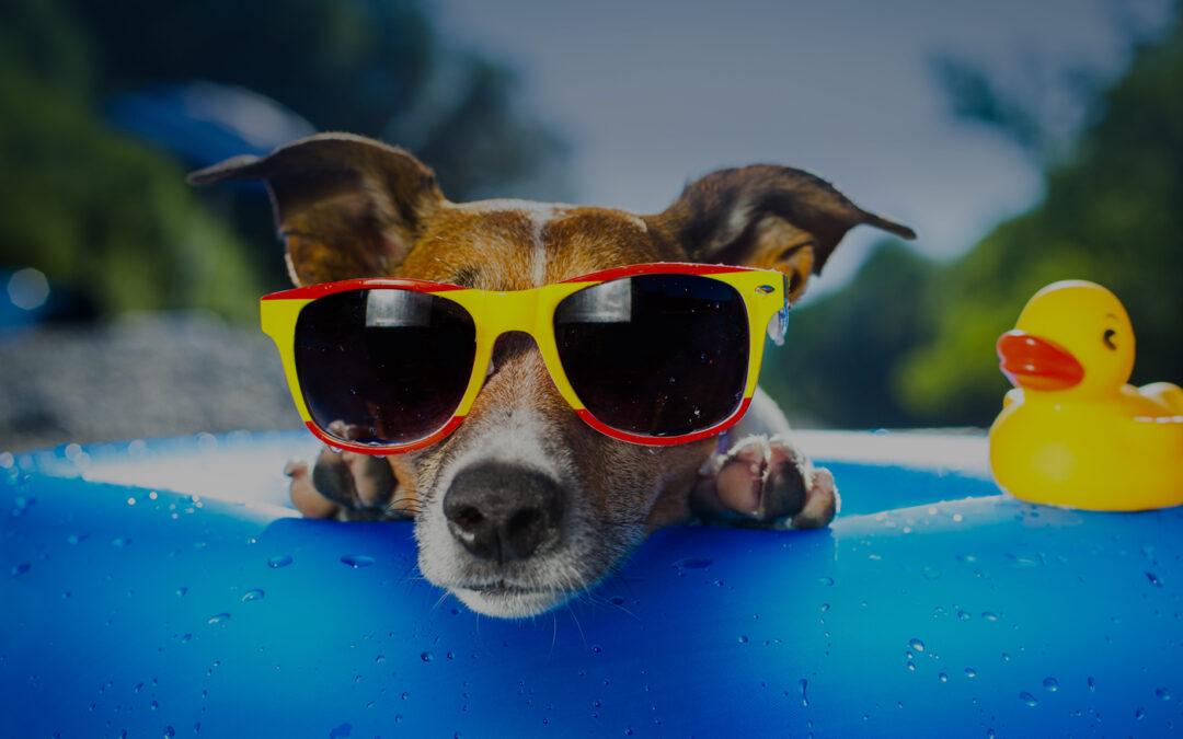 SPARCS – Conferência sobre a ciência do aprendizado canino
