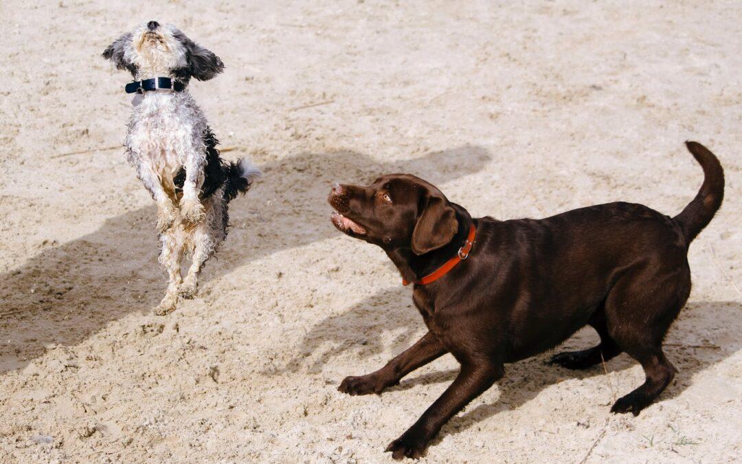 Qual a melhor raça de cães?
