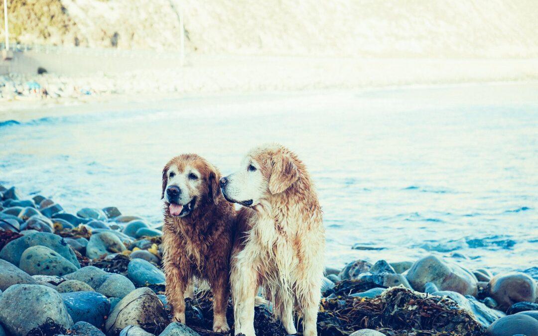 Dizem que os cães são leais