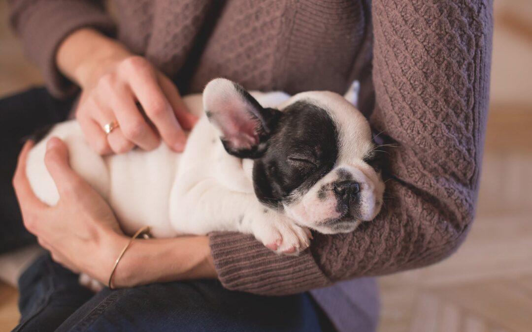 A dica MAIS importante para que tem um cãozinho!