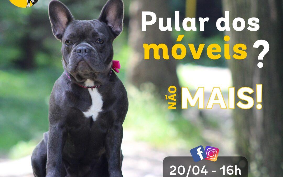 Aula gratuita: como ensinar os cães a não pular dos móveis?