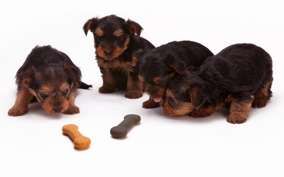 Petiscos para cães