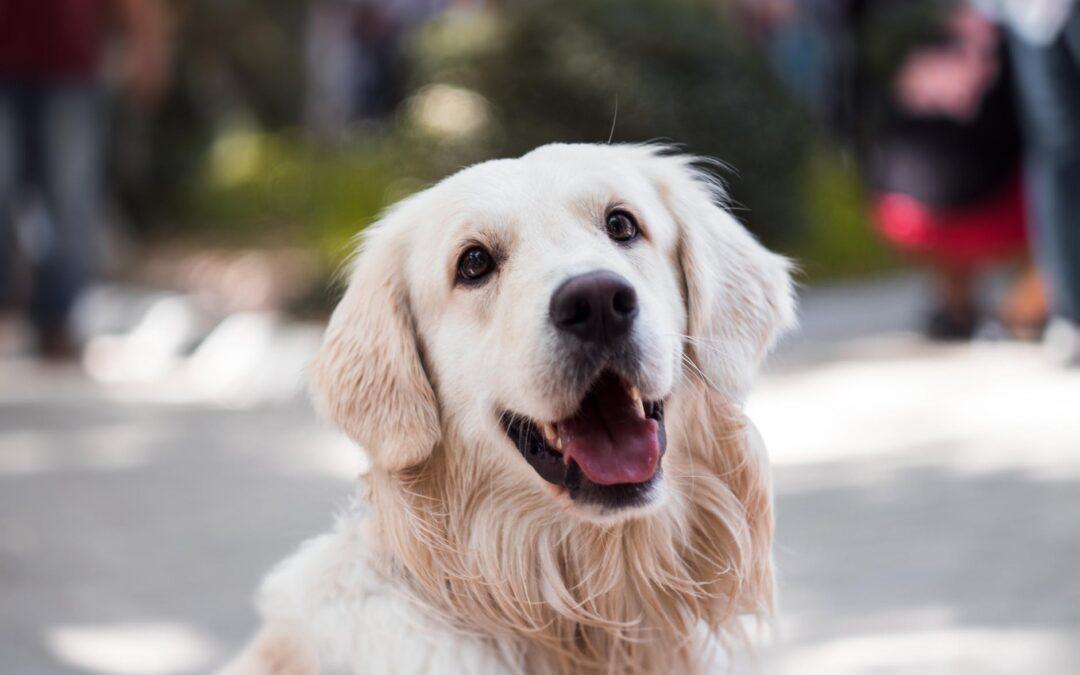Cachorro solto na rua – o que fazer?
