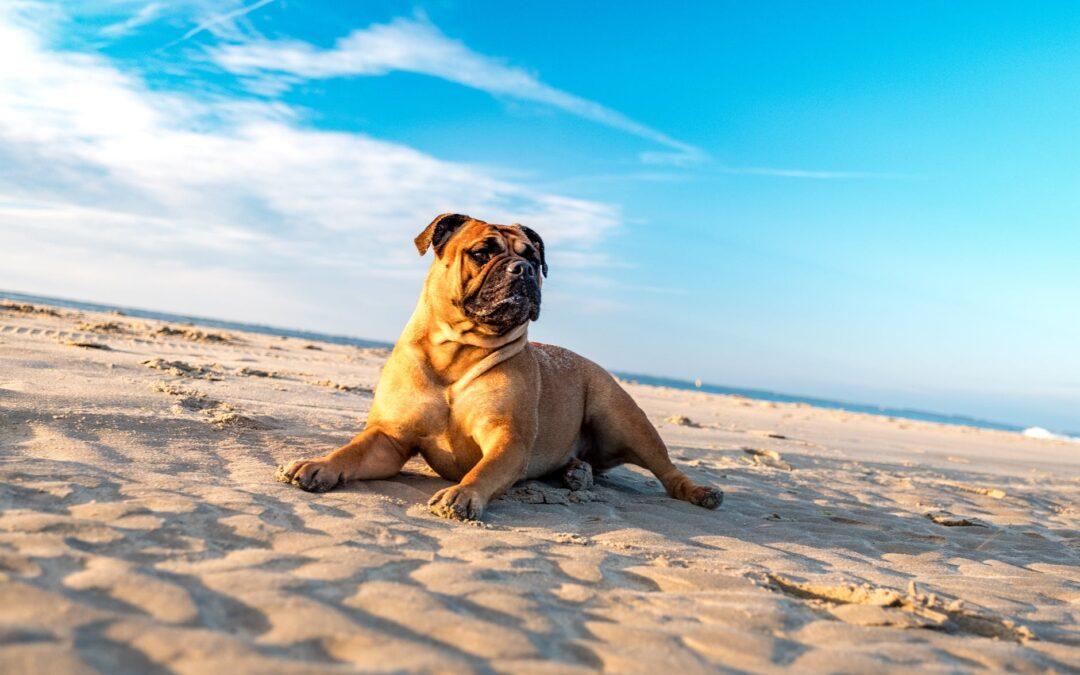 Como melhorar a qualidade de vida dos cães?