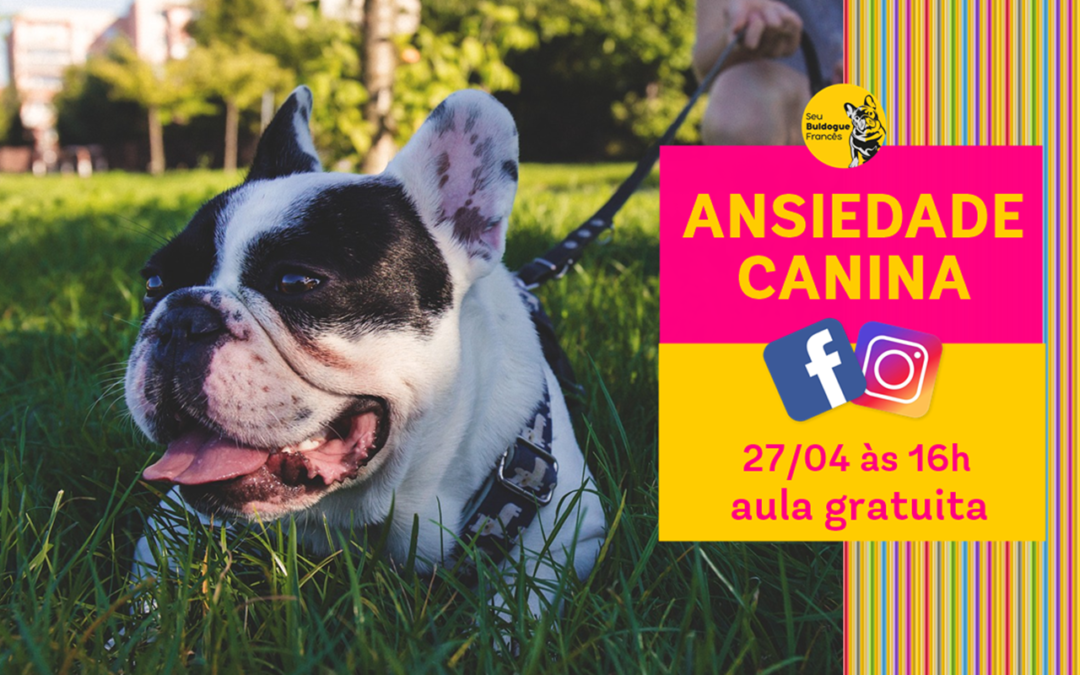 Aula gratuita: ansiedade canina
